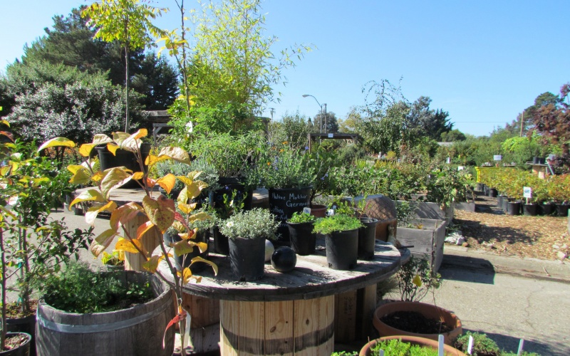 Ploughshares Nursery plants for sale