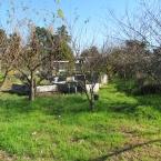 Alameda Point Collaborative garden area