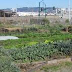Ploughshares Nursery run by Alameda Point Collaborative, 2701 Main Street