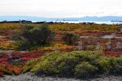 Nature Reserve Shoreline